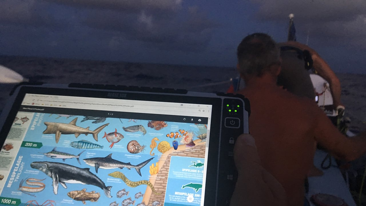 Looking for sharks on the Handheld Algiz 10X