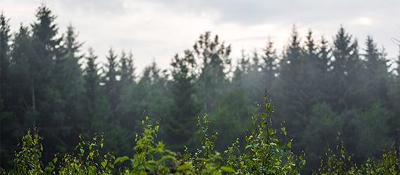 tree environment thumb